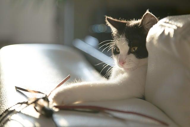 le chat joue la nuit et dort le jour