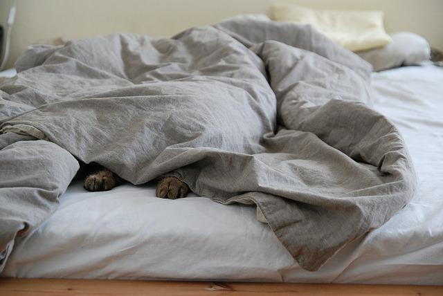 est-ce possible de dormir avec son animal